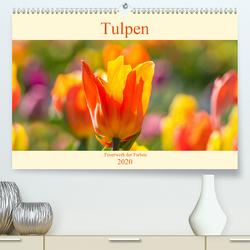 Tulpen – Feuerwerk der Farben (Premium, hochwertiger DIN A2 Wandkalender 2020, Kunstdruck in Hochglanz) von Scheurer,  Monika