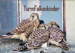Turmfalkenkinder (Wandkalender 2019 DIN A2 quer) von Grabow,  Ulrike