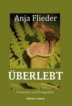 Überlebt von Flieder,  Anja