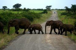 Uganda – Menschen, Tiere und Landschaften von Hentschel,  Ute, Rothgänger,  Hartmut