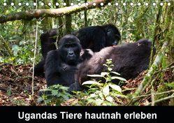 Ugandas Tiere hautnah erleben (Tischkalender 2019 DIN A5 quer) von Krause,  Johanna