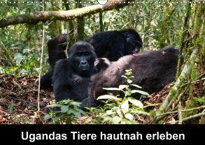 Ugandas Tiere hautnah erleben (Wandkalender 2018 DIN A3 quer) von Krause,  Johanna