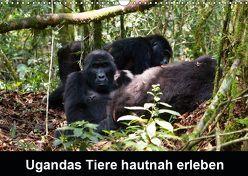 Ugandas Tiere hautnah erleben (Wandkalender 2019 DIN A3 quer) von Krause,  Johanna