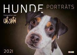 Uli Stein – Hunde Porträts 2021: Monatskalender für die Wand im Großformat von Stein,  Uli