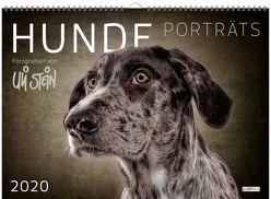 Uli Stein Hunde Portraits 2020 von Stein,  Uli