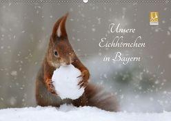 Unsere Eichhörnchen in Bayern (Wandkalender 2018 DIN A2 quer) von Cerny,  Birgit