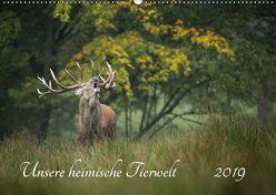 Unsere heimische Tierwelt (Wandkalender 2019 DIN A2 quer) von Reibert,  Björn
