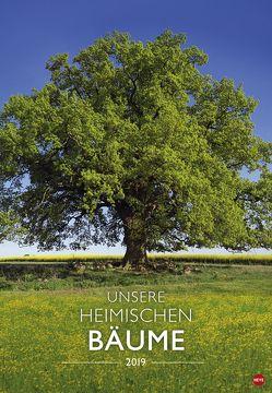 Unsere heimischen Bäume – Kalender 2019 von Heye