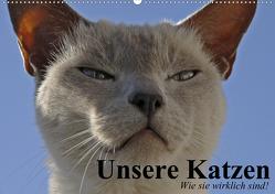 Unsere Katzen. Wie sie wirklich sind! (Wandkalender 2020 DIN A2 quer) von Stanzer,  Elisabeth