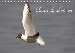 Unsere Lachmöwen (Tischkalender 2020 DIN A5 quer) von Andreas Lederle,  Kevin
