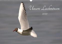 Unsere Lachmöwen (Wandkalender 2020 DIN A3 quer) von Andreas Lederle,  Kevin