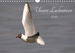Unsere Lachmöwen (Wandkalender 2020 DIN A4 quer) von Andreas Lederle,  Kevin