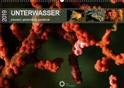 Unterwasser – artenreich, geheimnisvoll, spektakulär (Wandkalender 2019 DIN A2 quer) von Leipe (leipe photography),  Peter