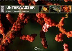 Unterwasser – artenreich, geheimnisvoll, spektakulär (Wandkalender 2019 DIN A3 quer) von Leipe (leipe photography),  Peter