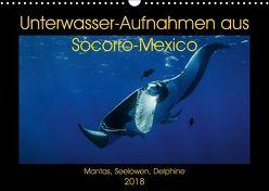 Unterwasser-Aufnahmen aus Socorro-Mexico (Wandkalender 2018 DIN A3 quer) von Caballero,  Sascha