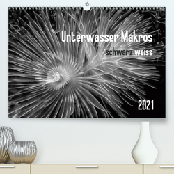 Unterwasser Makros – schwarz weiss 2021 (Premium, hochwertiger DIN A2 Wandkalender 2021, Kunstdruck in Hochglanz) von Weber-Gebert,  Claudia