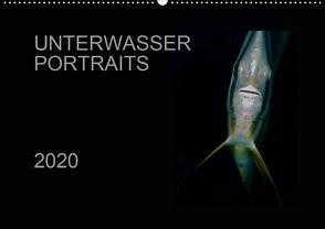 Unterwasser Portraits (Wandkalender 2020 DIN A2 quer) von Schulze / Kerstin Streicher,  Karsten