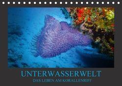 Unterwasserwelt – Das Leben am Korallenriff (Tischkalender 2018 DIN A5 quer) von Meutzner,  Dirk