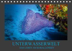 Unterwasserwelt – Das Leben am Korallenriff (Tischkalender 2019 DIN A5 quer) von Meutzner,  Dirk