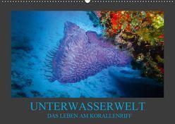 Unterwasserwelt – Das Leben am Korallenriff (Wandkalender 2019 DIN A2 quer) von Meutzner,  Dirk