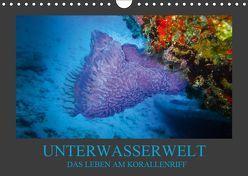 Unterwasserwelt – Das Leben am Korallenriff (Wandkalender 2019 DIN A4 quer) von Meutzner,  Dirk