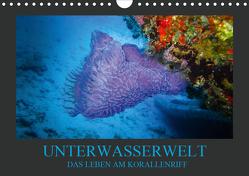 Unterwasserwelt – Das Leben am Korallenriff (Wandkalender 2020 DIN A4 quer) von Meutzner,  Dirk