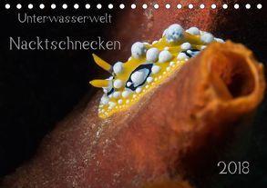 Unterwasserwelt Nacktschnecken (Tischkalender 2018 DIN A5 quer) von Oldani,  Dorothea
