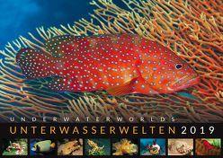 Unterwasserwelten 2019 von Mohrmann,  Hans-Jürgen