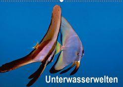 Unterwasserwelten (Wandkalender 2019 DIN A2 quer) von Gödecker,  Dieter