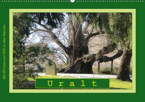 Uralt – Mit QR-Code und GPS zu alten Bäumen (Wandkalender 2020 DIN A2 quer) von Keller,  Angelika