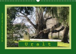 Uralt – Mit QR-Code und GPS zu alten Bäumen (Wandkalender 2020 DIN A3 quer) von Keller,  Angelika