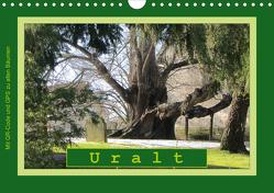 Uralt – Mit QR-Code und GPS zu alten Bäumen (Wandkalender 2020 DIN A4 quer) von Keller,  Angelika
