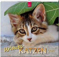 Urlaubs-Katzen von Ptacek,  Miroslav