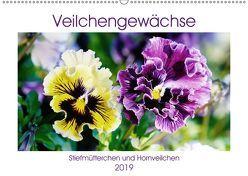 Veilchengewächse – Stiefmütterchen und Hornveilchen (Wandkalender 2019 DIN A2 quer) von Kruse,  Gisela