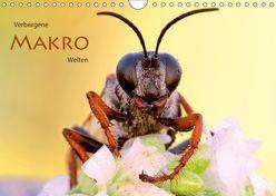 Verborgene Makro-Welten (Wandkalender 2019 DIN A4 quer) von Brandmeier,  Wolfgang