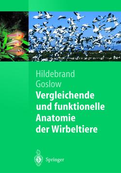Vergleichende und funktionelle Anatomie der Wirbeltiere von Distler,  Claudia, Goslow,  George, Hildebrand,  Milton