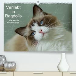 Verliebt in Ragdolls … die sanfte Katzenrasse (Premium, hochwertiger DIN A2 Wandkalender 2021, Kunstdruck in Hochglanz) von Reiß-Seibert,  Marion