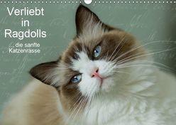 Verliebt in Ragdolls … die sanfte Katzenrasse (Wandkalender 2019 DIN A3 quer) von Reiß-Seibert,  Marion