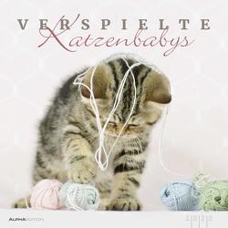 Verspielte Katzenbabys 2020 – Kittens – Bildkalender (33 x 33) – Tierkalender – Wandkalender von ALPHA EDITION, Eckelt,  Natalie