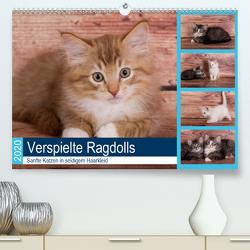 Verspielte Ragdolls – Sanfte Katzen in seidigem Haarkleid (Premium, hochwertiger DIN A2 Wandkalender 2020, Kunstdruck in Hochglanz) von Verena Scholze,  Fotodesign