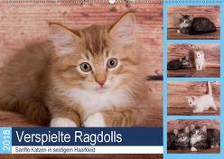 Verspielte Ragdolls – Sanfte Katzen in seidigem Haarkleid (Wandkalender 2018 DIN A2 quer) von Verena Scholze,  Fotodesign