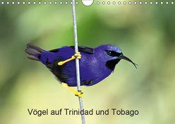 Vögel auf Trinidad und Tobago (Wandkalender 2019 DIN A4 quer) von W. Bruechle,  Dr., Weiterstadt