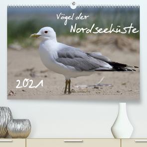 Vögel der Nordseeküste (Premium, hochwertiger DIN A2 Wandkalender 2021, Kunstdruck in Hochglanz) von Allnoch,  Jan