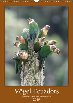 Vögel Ecuadors (Wandkalender 2019 DIN A3 hoch) von Brockner,  Armin