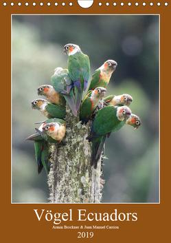 Vögel Ecuadors (Wandkalender 2019 DIN A4 hoch) von Brockner,  Armin