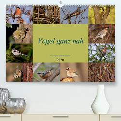 Vögel ganz nah (Premium, hochwertiger DIN A2 Wandkalender 2020, Kunstdruck in Hochglanz) von Erlwein,  Winfried