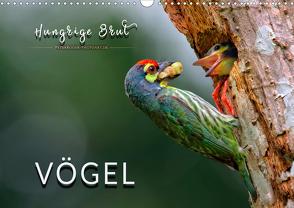 Vögel – Hungrige Brut (Wandkalender 2020 DIN A3 quer) von Roder,  Peter