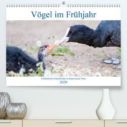 Vögel im Frühjahr (Premium, hochwertiger DIN A2 Wandkalender 2020, Kunstdruck in Hochglanz) von pixs:sell
