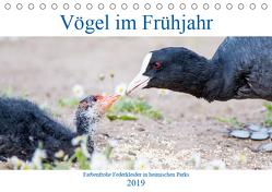 Vögel im Frühjahr (Tischkalender 2019 DIN A5 quer) von pixs:sell