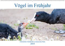 Vögel im Frühjahr (Wandkalender 2019 DIN A2 quer) von pixs:sell